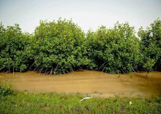 Namorzyny rosną powoli w słonej wodzie