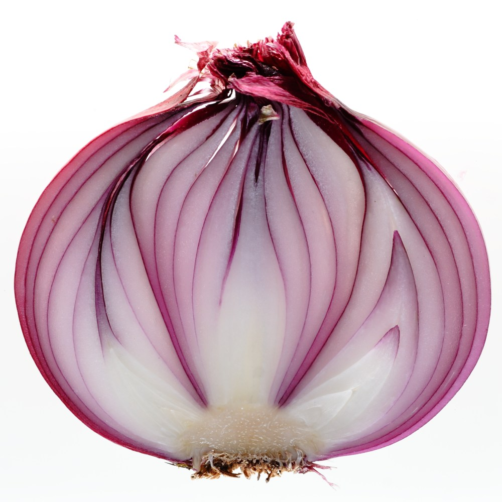 Life and the Onion
