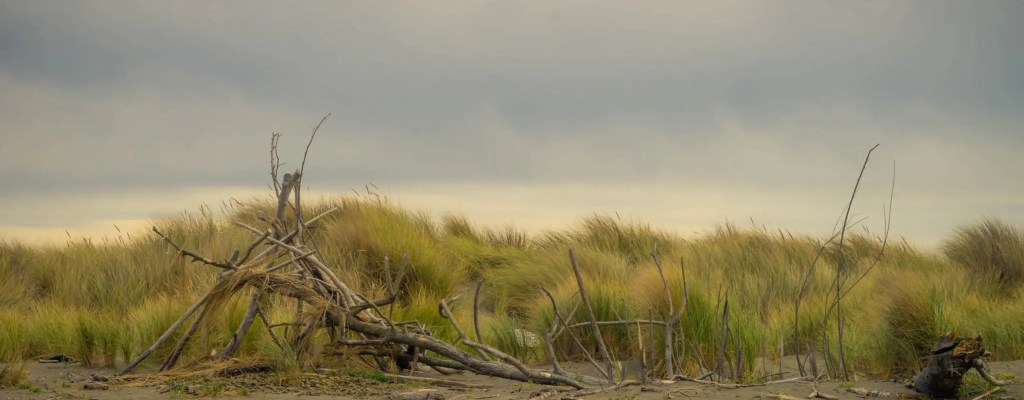 Sunday Serenity: Eureka Coast