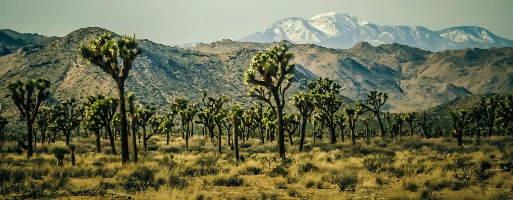 Sunday Science: The Joshua Tree