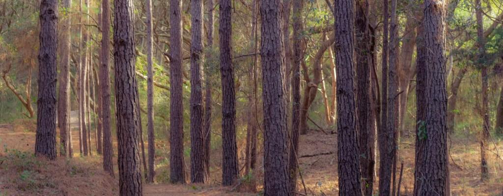 Tuesday Trees: South Carolina