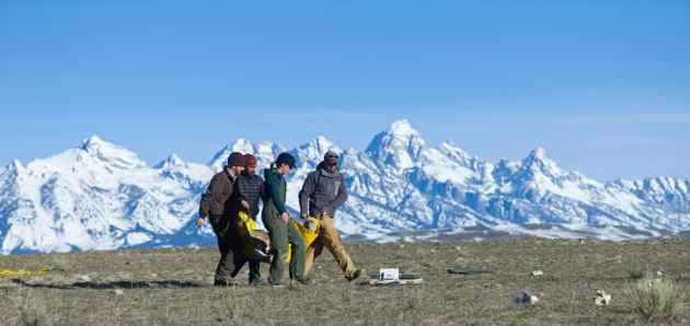On the National Elk Refuge in Jackson Hole, Wyoming Game and Fish biologist Aly Courtemanch , third from left, helps carry a bighorn ewe to a scale before it is released during a biological study Friday. Biologists want to know why some sheep herds are more susceptible to pneumonia  than others and a three-year study on three different herds might provide some answers. (Angus M. Thuermer Jr./WyoFile)