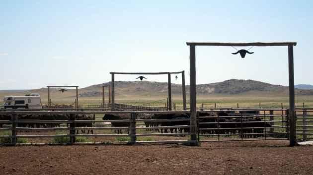 Pathfinder Ranch corrals. (Dustin Bleizeffer/WyoFile)