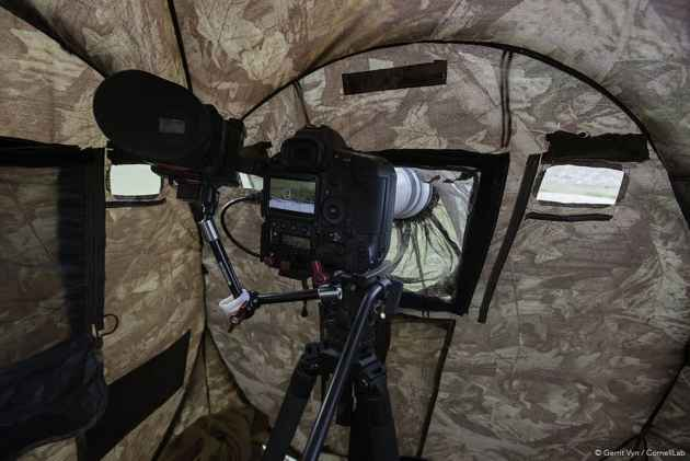 """Filmmakers used blinds to gain close access to sage grouse during production of """"Sagebrush Sea."""" (Courtesy Gerrit Vyn)"""