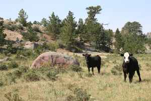 The UW and CSU foundations accepted the Y Cross ranch as a major donation, including one condition: that they could not sell it until after 14 years of attempting to meet the donor's intended use. (courtesy Donal O'Toole)