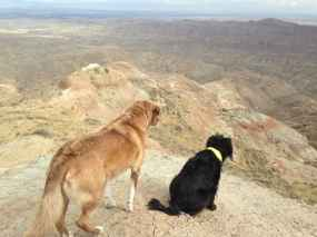 """""""Bonnie and Bart enjoy the view at McCullough Peaks."""" (Keith Collins)"""