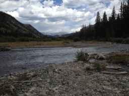 Wiggins Fork, Shoshone National Forest. (courtesy Ellen Halperin)