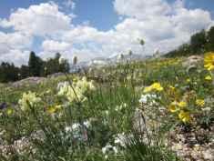 """Alpine wildflowers with Wind River Peak in the background."" (Steff Kessler, Lander)"