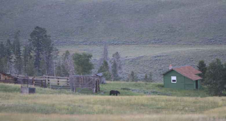 Wyoming Game and Fish Department works with landowners who have conflicts with grizzly bears. Social tolerance of grizzlies is one parameter used to determine where they will persist after federal protections are lifted. But some wonder whether that social factor is an appropriate yardstick and who gets to define it. (Wyoming Game and Fish)