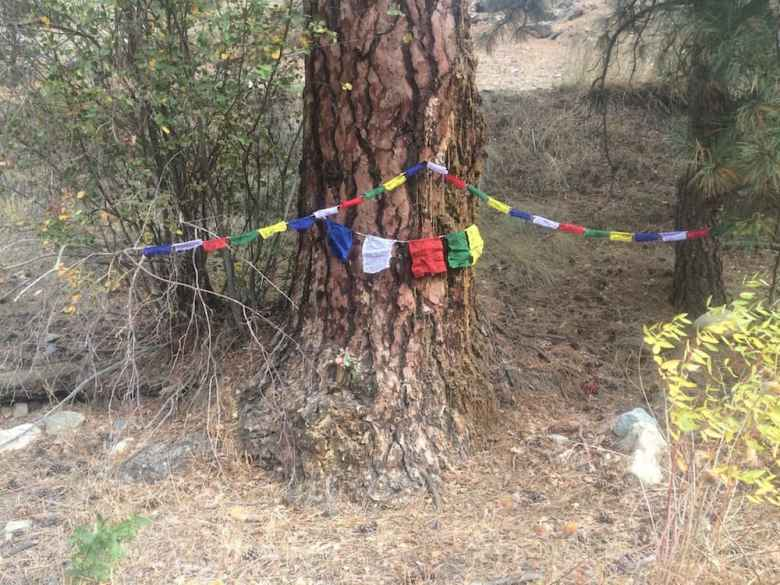 Jackson Hole friends visited the grandfather tree under which Schmitz curled up and died and commemorated it with prayer flags. (courtesy photo)