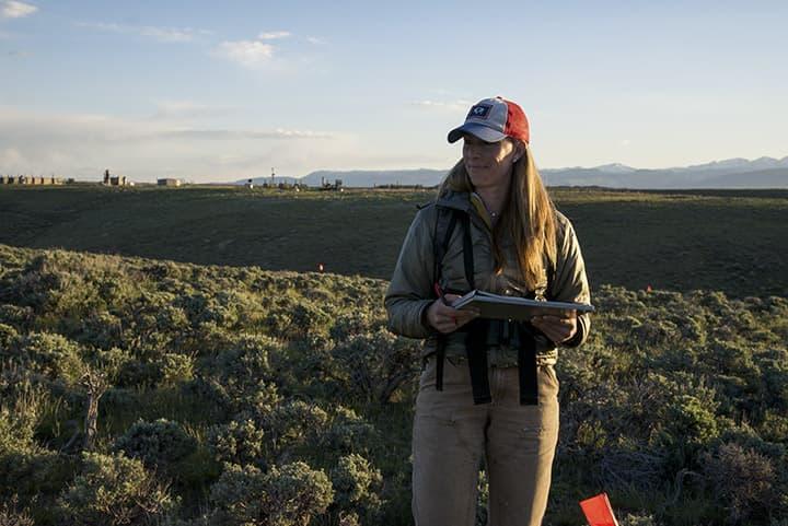 Anna Chalfoun looks for songbird nests in the sagebrush. Chalfoun has been studying sagebrush songbirds since 2008. (Dave Showalter).