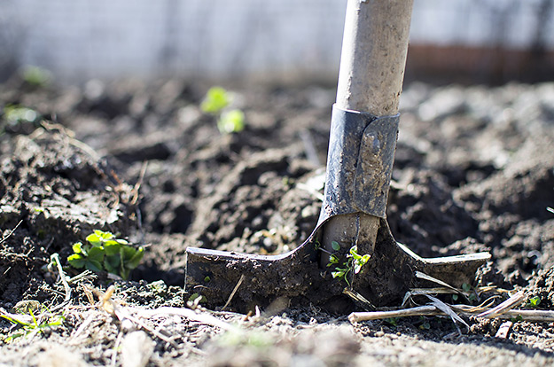 Adding amendments to your soil