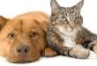 Anderson Co. Health Department announces rabies clinics