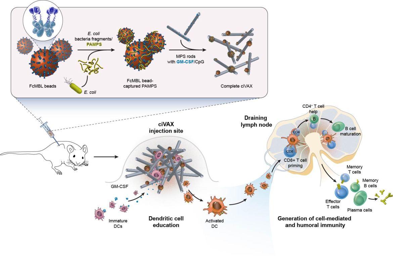 Las vacunas de biomateriales previenen una amplia gama de infecciones bacterianas y choque séptico