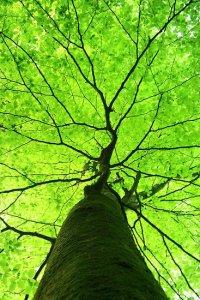 Arbre feuillage vert