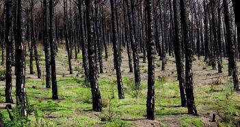 Spalone w pożarach lasy na zboczach Wezuwiusza. Jak wyglądają w 2019?