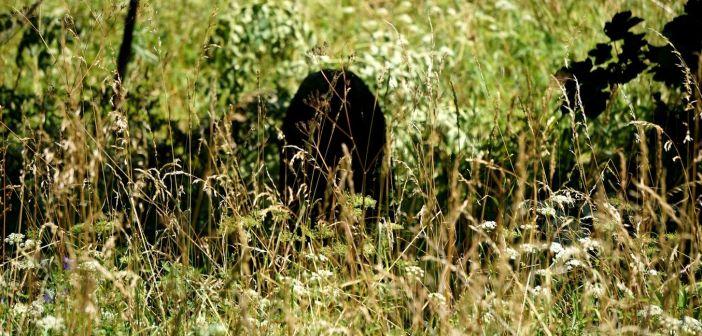 Tajemniczy kamień z Błażkowej! Ma prawie 450 lat i opowiada historię podziału …