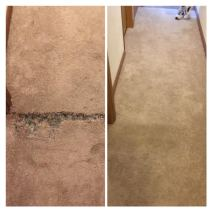 Carpet Repair Pet Damage