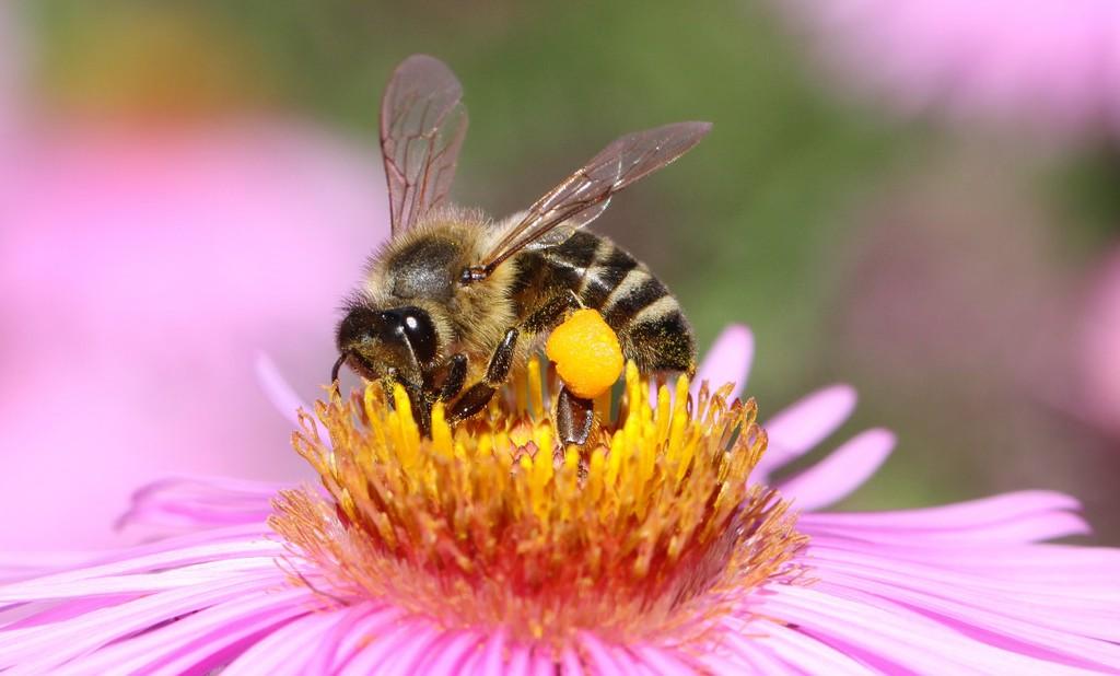 Поліція розслідує причини масової загибелі бджіл на Харківщині