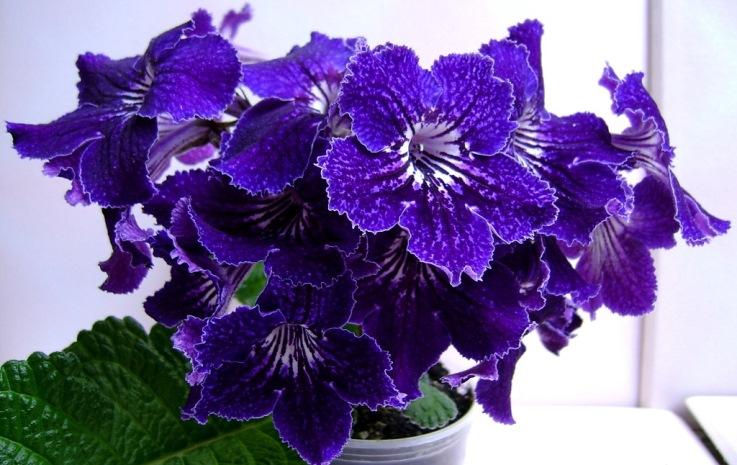 У виставковому залі «Бузок» відкрилась традиційна виставка живих квітів.