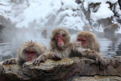macaque01_3