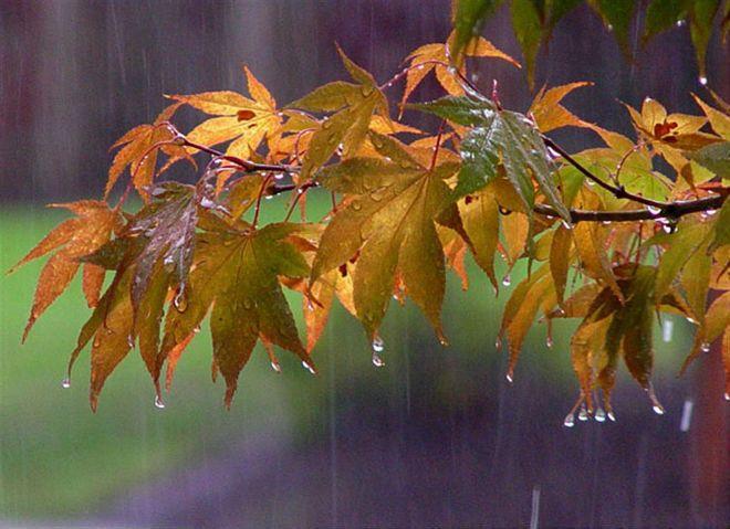 Цього тижня прогнозують перші осінні дощі