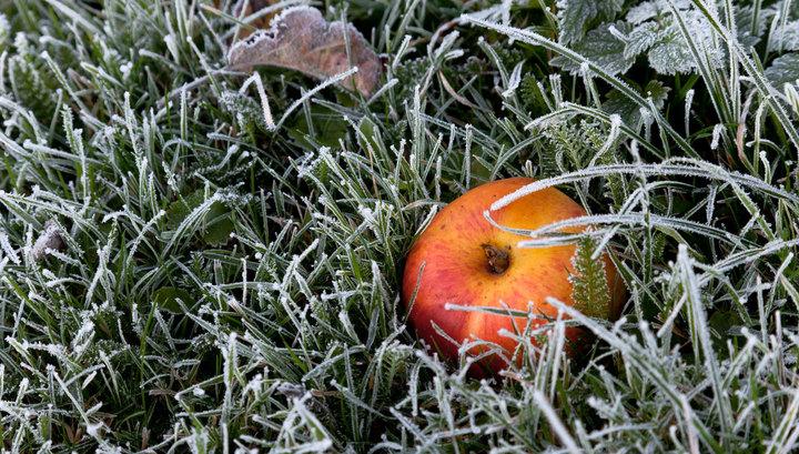 Цього тижня прогнозують перші заморозки