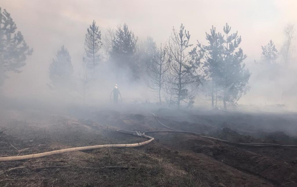 Пожежі у природних екосистемах набирають загрозливих масштабів