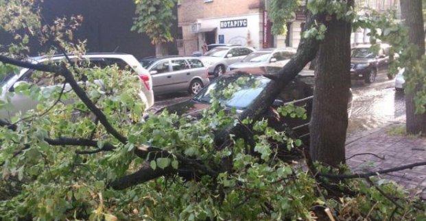 Через сильний вітер падали дерева та гілки
