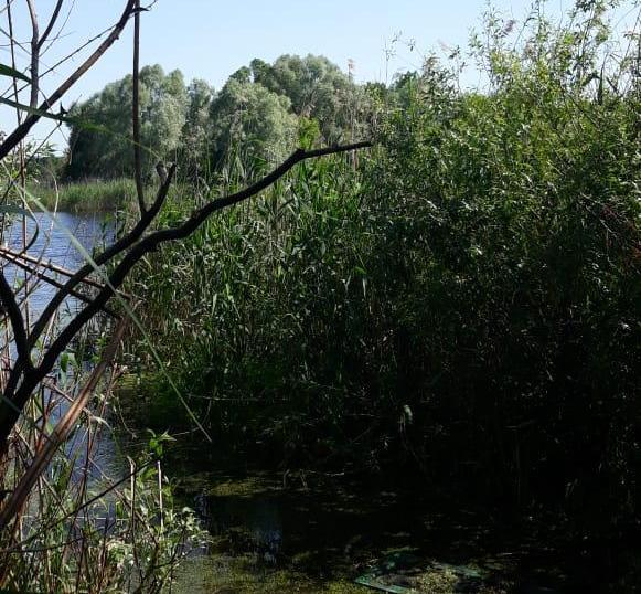 На Харківщині потонула 9-річна дитина