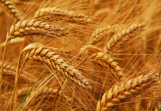 В Україні суттєво подорожчали зернові