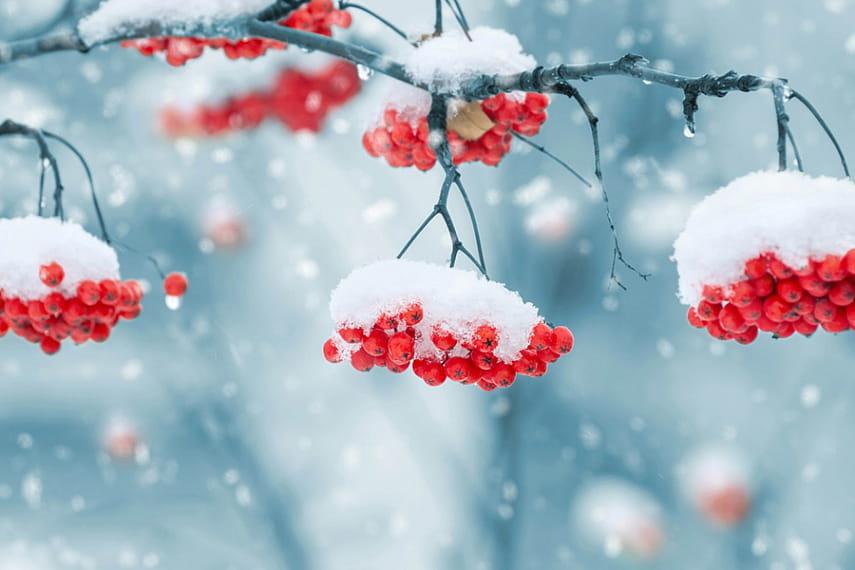 Цього тижня синоптики прогнозують на Харківщині похолодання