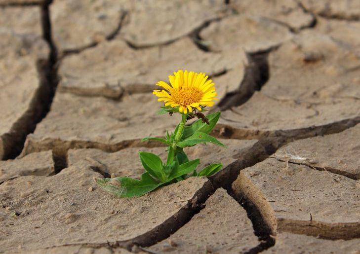 Екологи прогнозують небувалу спеку і посуху
