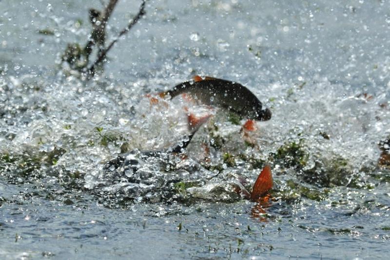 Вступила в дію весняно-літня нерестова заборона на вилов риби