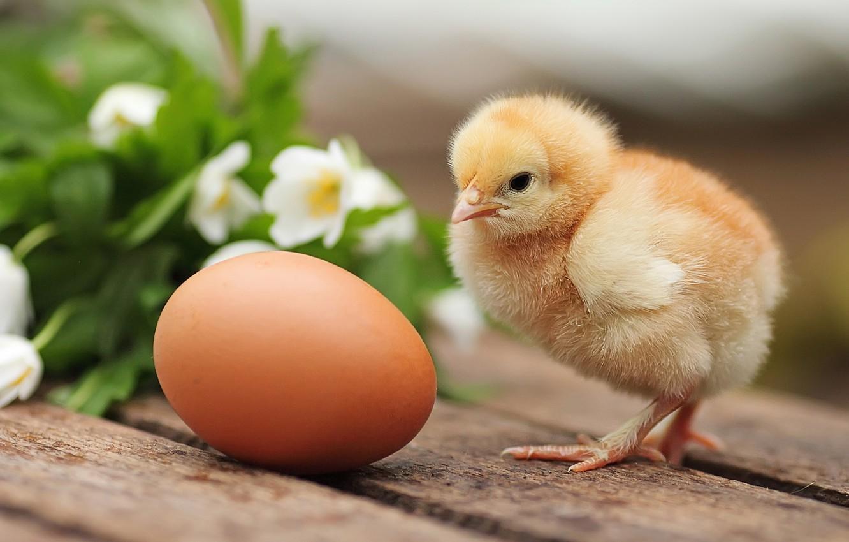 У господарствах Харківщини знизилась кількість птиці та великої рогатої худоби