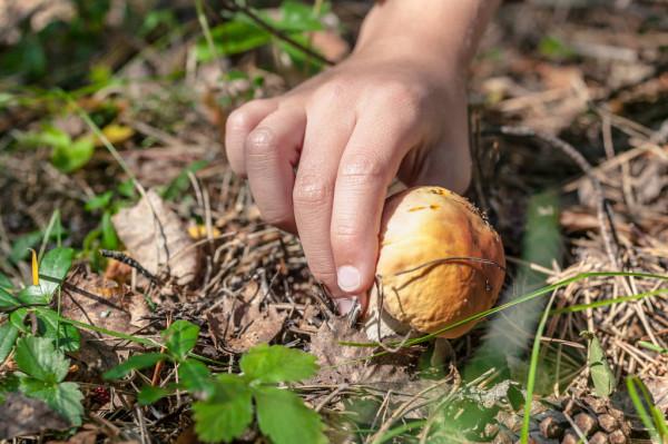 Школярі отруїлися дикорослими грибами