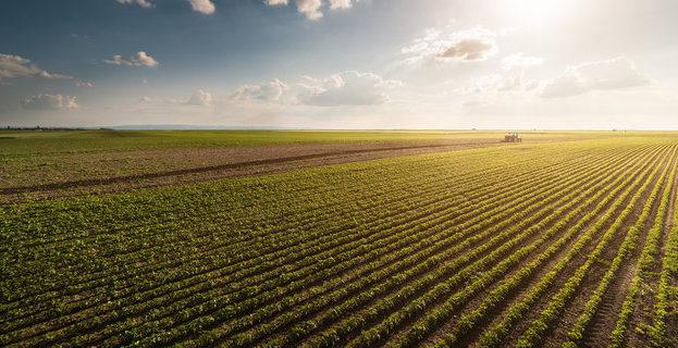 В Україні завершується посівна кампанія