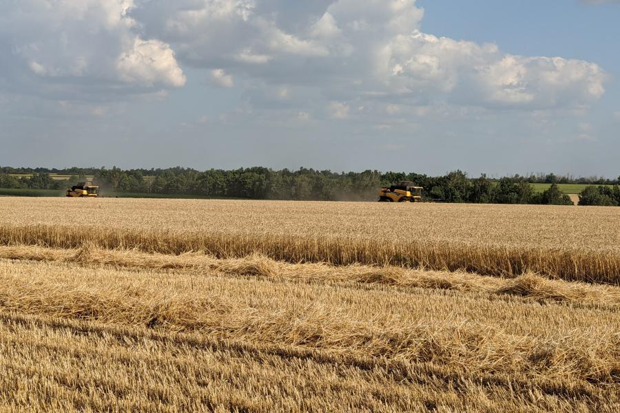 У двох районах Харківщини зібрали понад 100 тисяч тонн зерна