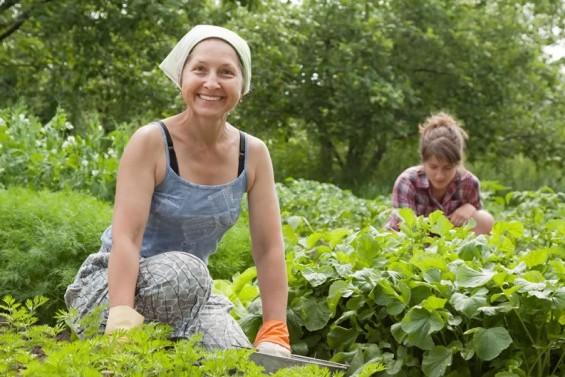 На сільгосппідприємствах Харківщини працює понад шести тисяч жінок