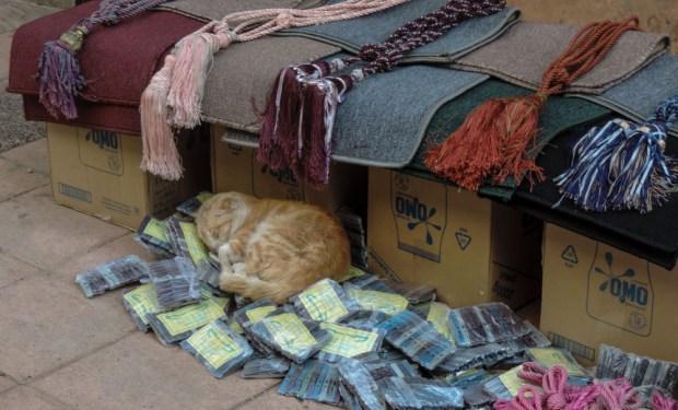 Asleep in the shop window.