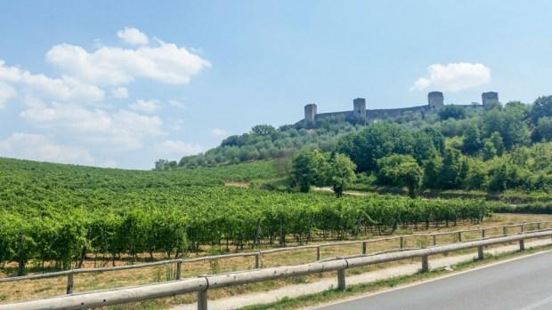 Lots and lots of chianti vines in the Chianti region.
