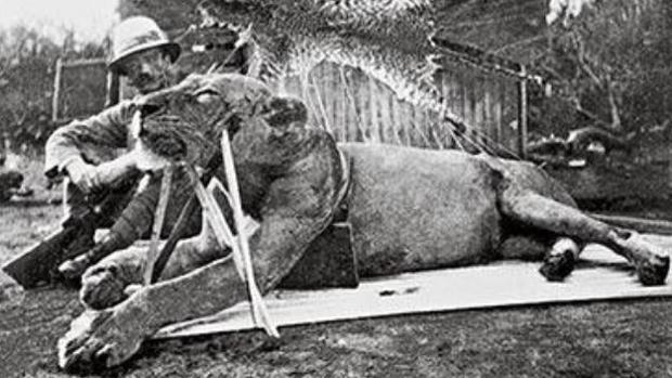 La verdad sobre los leones devorahombres de Tsavo