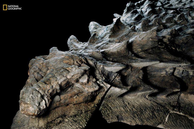 ¿Cómo es posible que el fósil de un dinosaurio de 100 millones de años aun conserve perfectamente su piel?