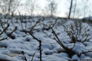 snowy nature#1_©xavigeis
