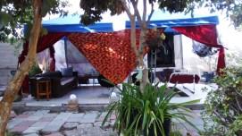 thaita-backyardjuly2014 (1)