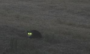 kattenogen in het donker