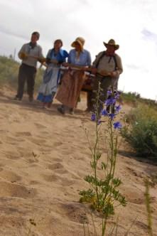 alexismoser-pioneerflowersfocus