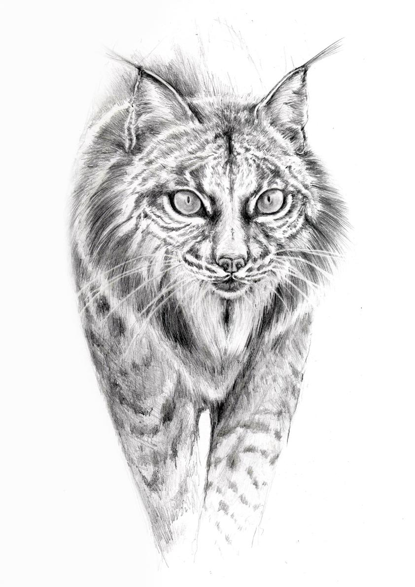 Drawing Xellcampos Cat