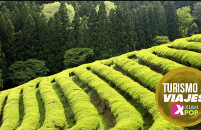 Festival del té verde en Boseong