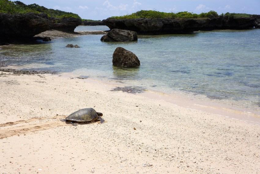 Kuroshima y sus tortugas. (Cr. Nanseirakuen)